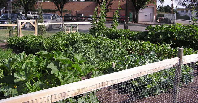 The Gardens are Flourishing!!! image