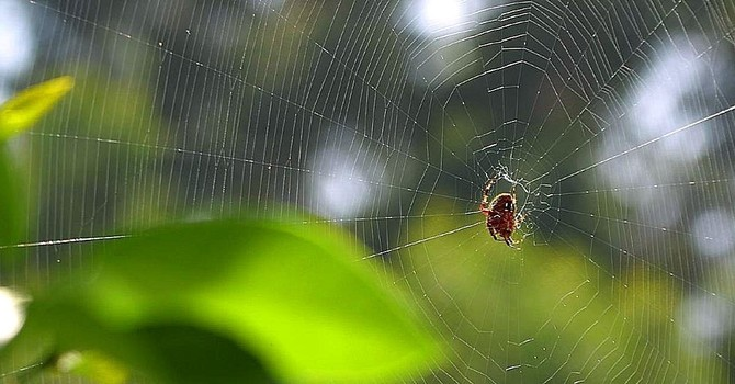 It Takes a Spider to Repair its Own Web image