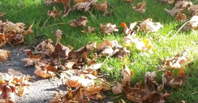 An Autumn Meditation image
