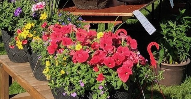 Spring Plant Sale Fundraiser Still Happening image