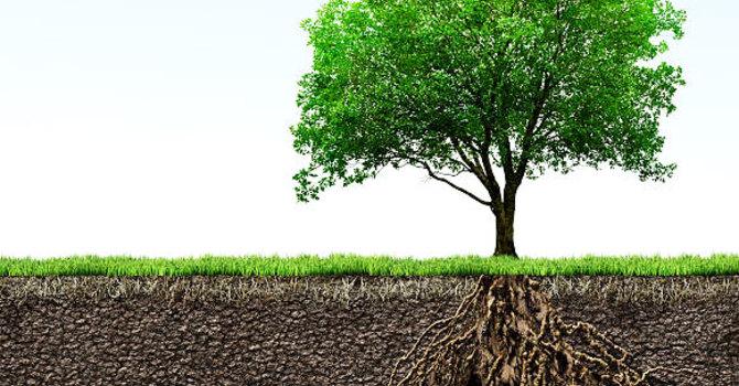 Trinity ~ Image of a Tree image