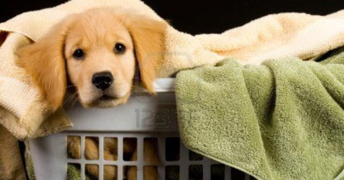 Towels for Paws image