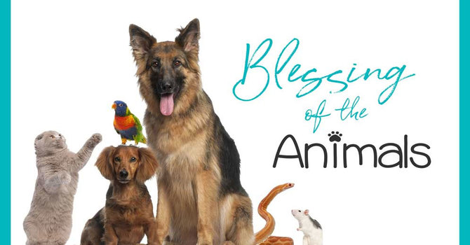 Bring Your PET to Church image