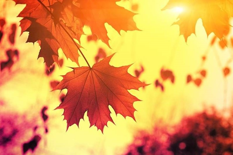 Autumn Brings ... A Call to Letting Go (part seven)