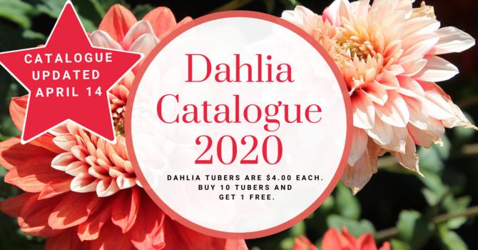 DAHLIA TUBERS CATALOGUE 2020  image