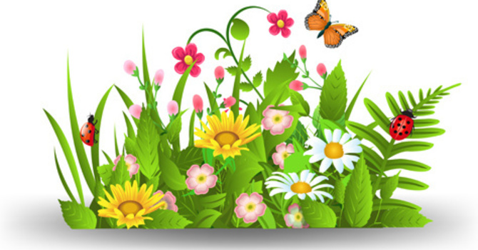 Annual Plant Sale  image