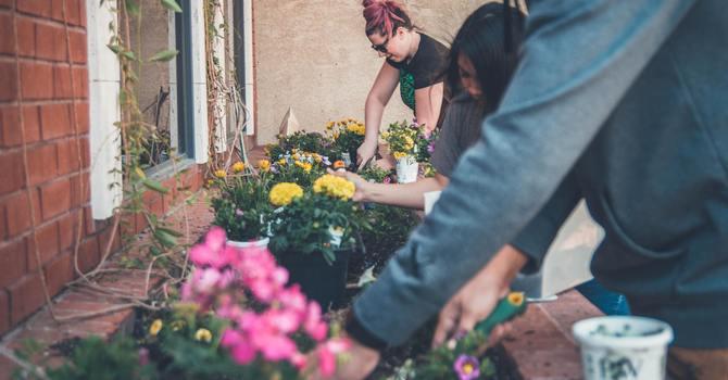 Plant Sale image
