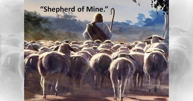 Shepherd of mine