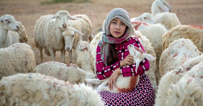 Meet the Shepherd...Meet Christ