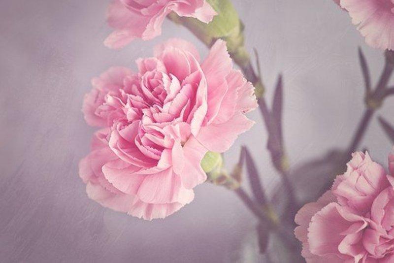 Reflection: Mothers' Day, Easter V
