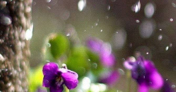 A Rainy Day Reflection  image