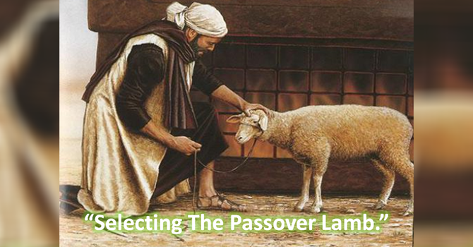 Selecting the Passover Lamb