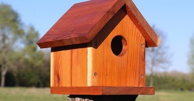 Bird House Competition image