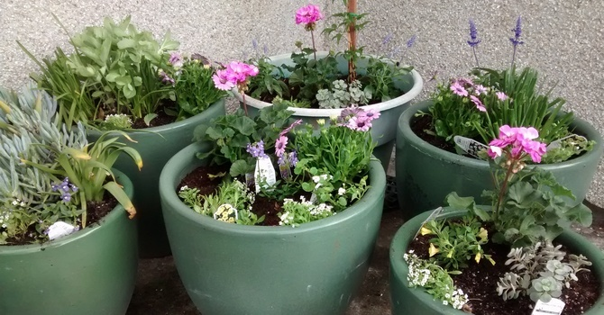 Children Create Flower Pots  image