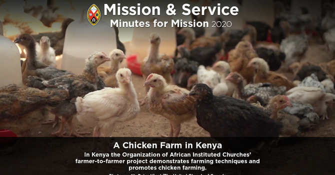 Minute for Mission: A Chicken Farm in Kenya image