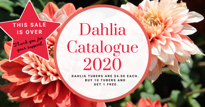 Dahlia Tuber Sale is over for 2020 image