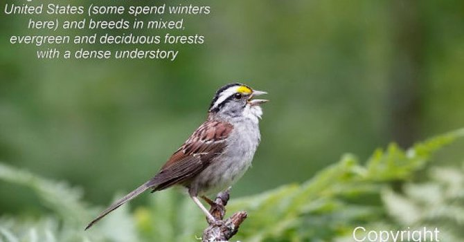 Healthy Forest Coalition - For the birds Campaign image