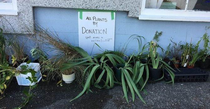 Thank You for Your Donations, Plant Sale Raised $1081.30 image