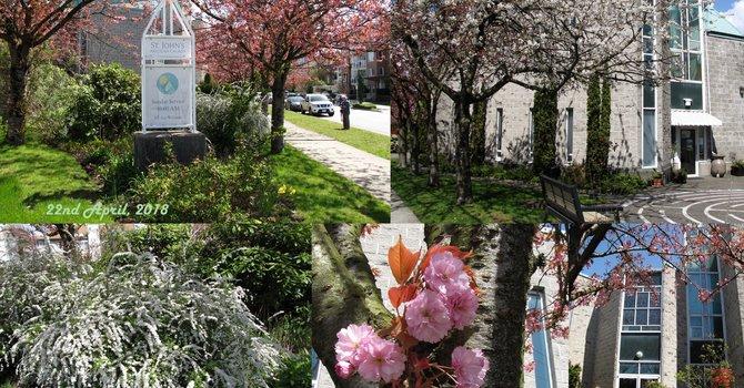 Spring Has Sprung At St John's image