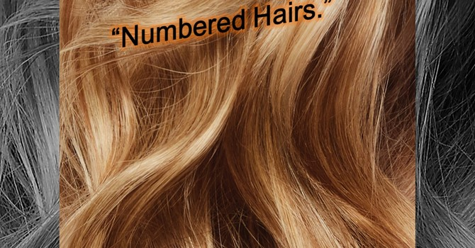 Numbered Hairs.