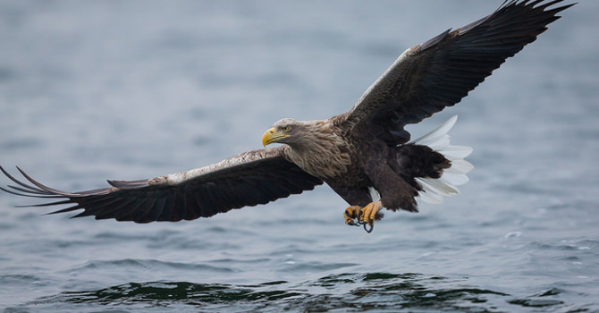 Fly Like An Eagle: How High Are You Willing to Soar?  image