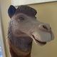 Mindy de Camelle