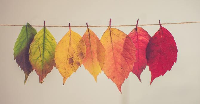The Seasons' of life image