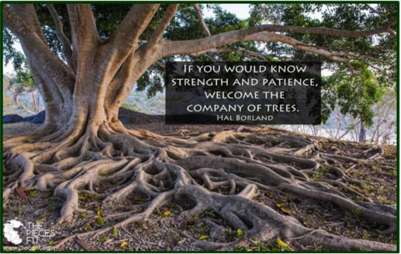 Spiritual Resiliency via Creation - Worship Tab
