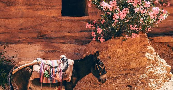9th July- King Rides Donkey