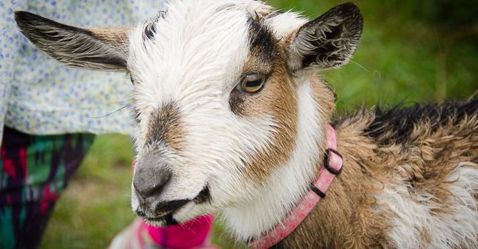 Barnhartvale Pet Blessing a Wet Success image