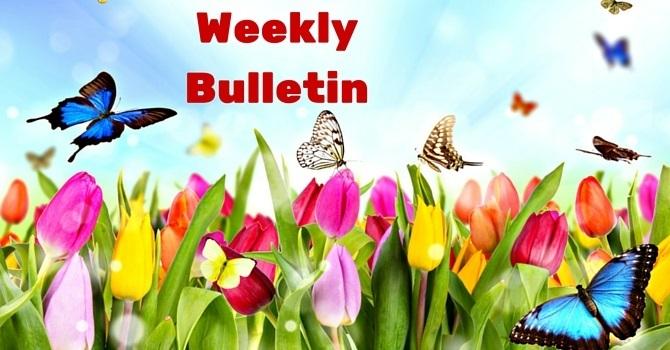 Weekly Bulletin | July 24, 2016 image