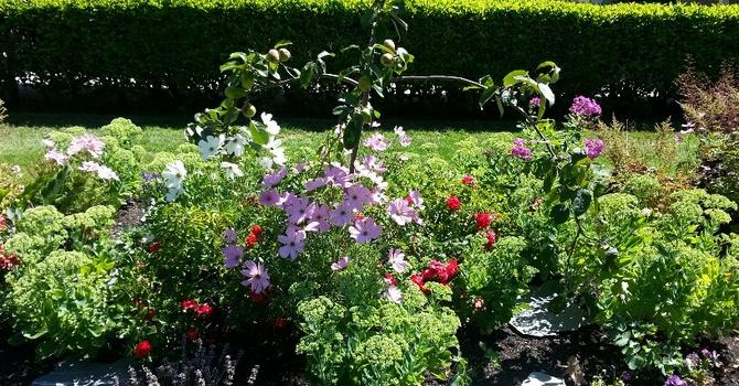 Steve Jackson Talks about the Garden image