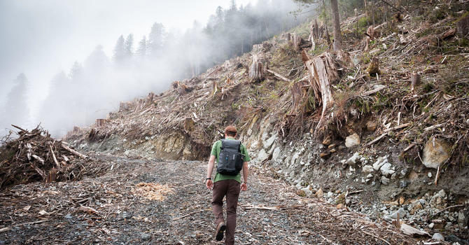 St. George's to Sign Old-Growth Forest Protection Resolution image