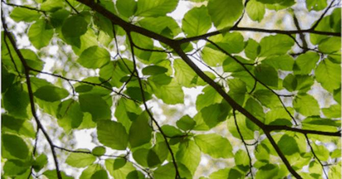 Trees, Plants & Flowers image