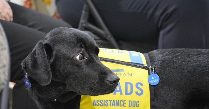 Dog days at St Agnes image