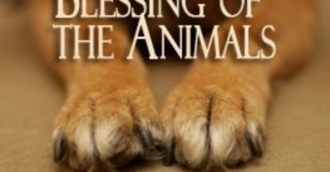 May 31, 2015 ~ Blessing of the Animals image