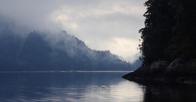 Enjoy good news about the Great Bear Rainforest image