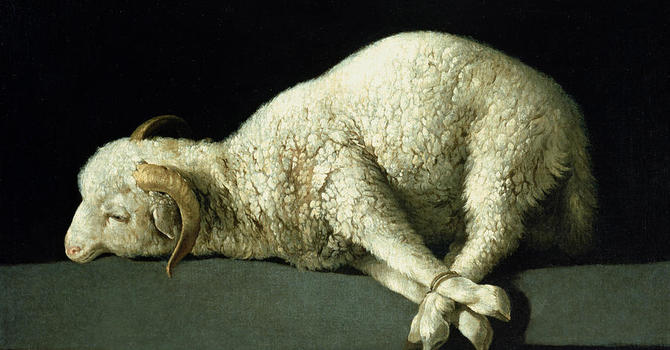 21st August - The Sacrifice of God's Passover Lamb