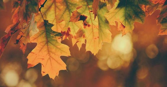 Submissions for Fall Newsletter image