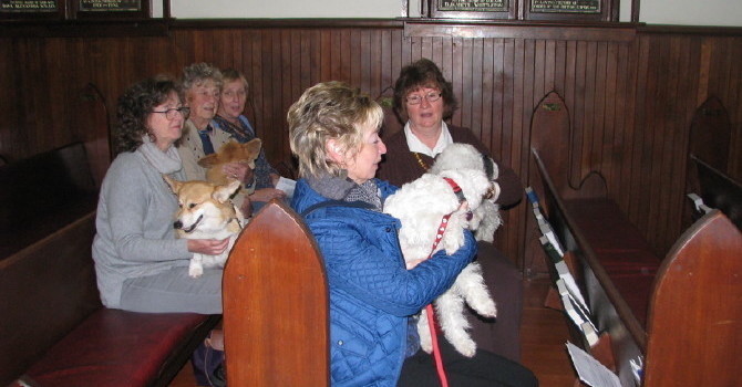 Pets and Their Humans Loved the Blessing of the Animals Service image