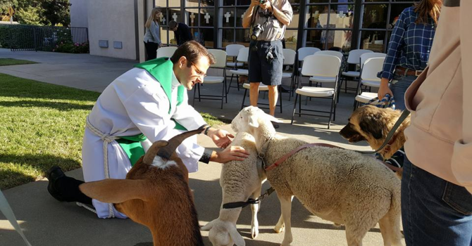 St. Francis Day Blessing of the Animals Video Blessings image