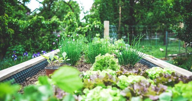 Garden space needed for Shelbourne Community Kitchen