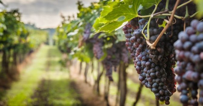Parable of Laborers in the Vineyard image