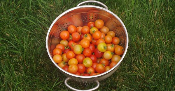 A Harvest of Plenty
