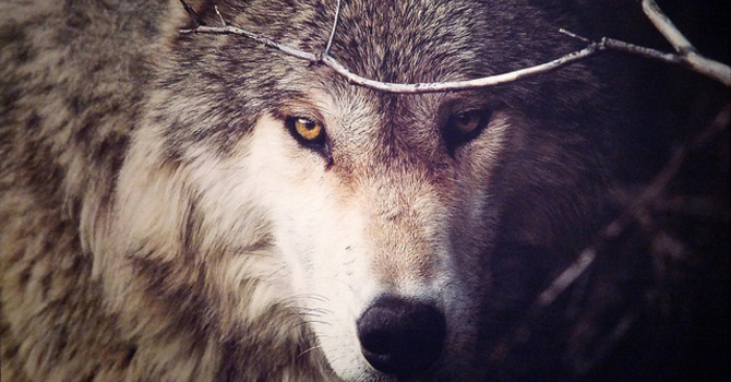 How to Kill the Wolf of Distraction image