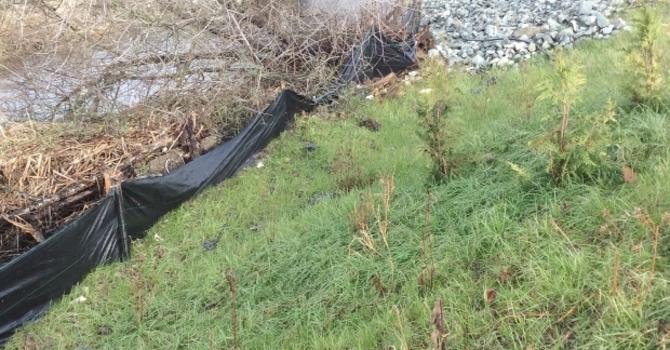 Bertrand Creek Clean-Up image