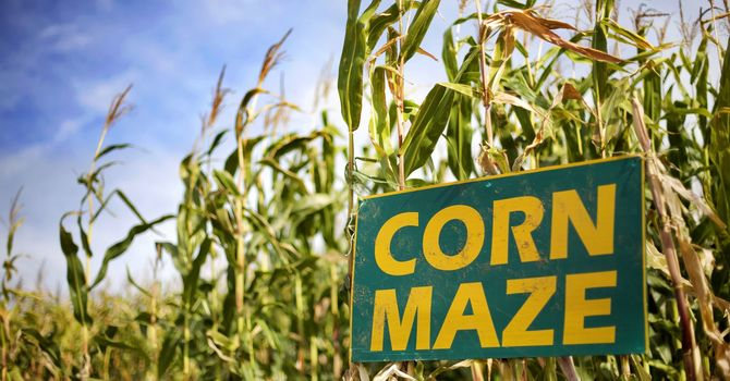 JCREW to Sease Corn Maze