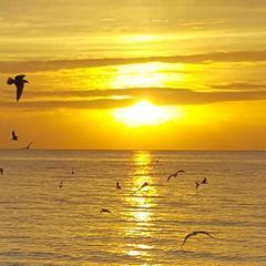 Sunrise%20birds3