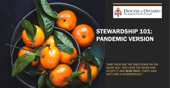 Stewardship 101: Stewardship in a Pandemic image
