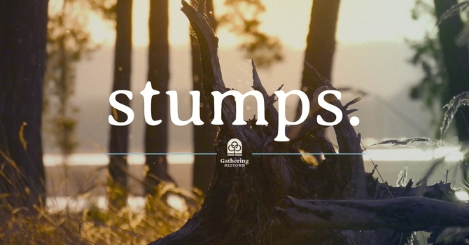 2020: The Year of Stumps